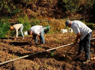 Training Course in Potato and Vegetable Growing in the Canary Islands