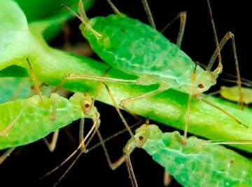Training Course in Pests and Diseases