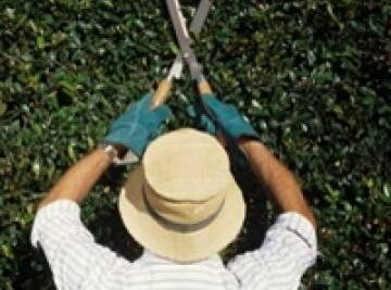 Training Course in Pruning of Trees, Shrubs and Palm Trees
