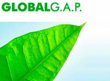 IMPLANTACIÓN BUENAS PRÁCTICAS AGRÍCOLAS SEGÚN GLOBAL G.A.P.