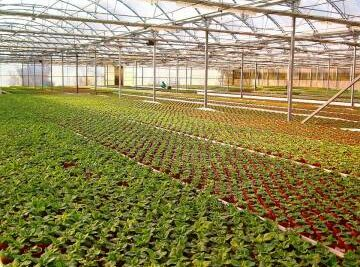 Training Course in Plant Production and Nursery