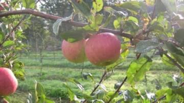 Cours de fruiticulture écologique