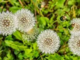 Desde Agro Cabildo han elaborado esta excelente guía para el control de hierbas espontáneas en agricultura ecológica. ¡Entra en el enlace y descárgate el archivo! Te será de mucha utilidad