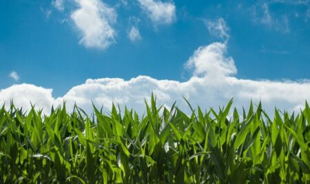 Riesgos laborales en agricultura y cómo prevenirlos