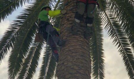 El viernes 22 terminó el curso de especialización de trabajos en palmeras, ¿te interesa realizarlo más adelante? Preinscríbete, te llamaremos cuando vaya a empezar otra edición