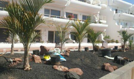 Asesoramiento en jardinería para complejos hoteleros de Fuerteventura
