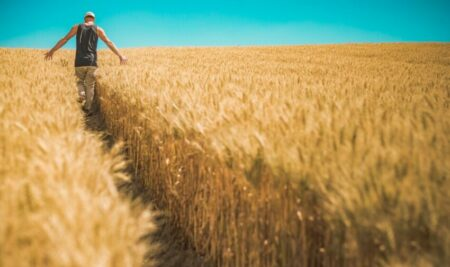 Los cultivos mixtos de cereales y leguminosas ayudan a mitigar el cambio climático